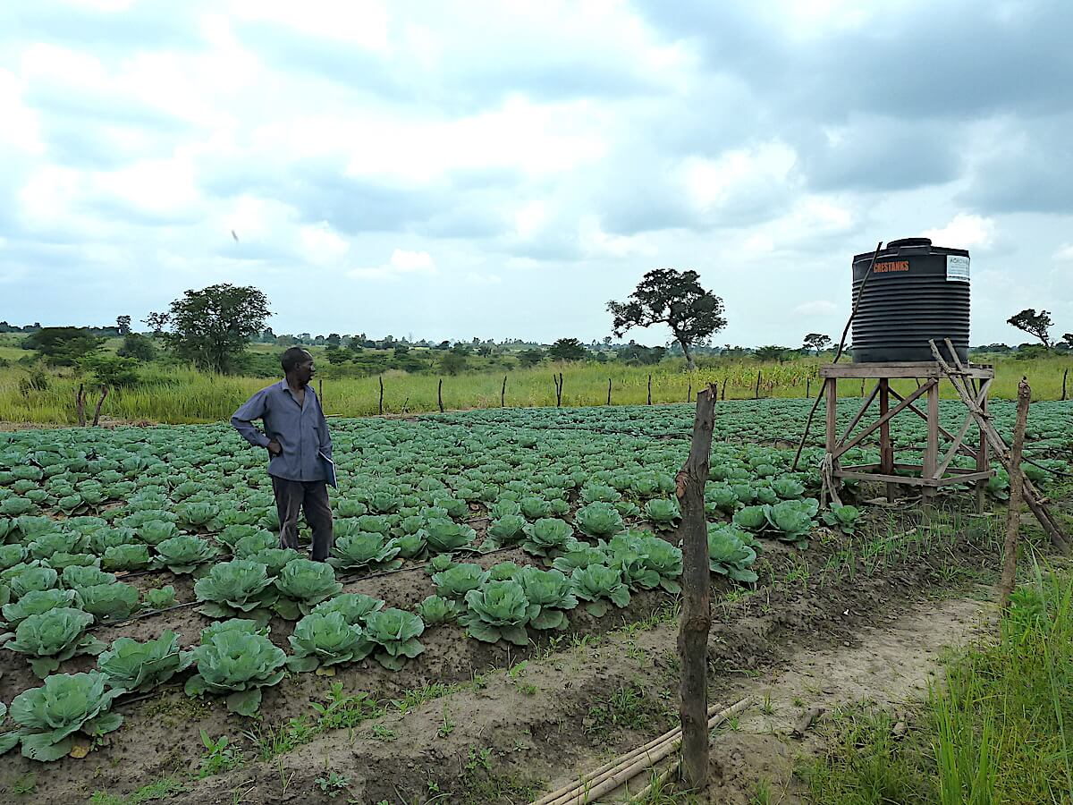 Vegetables grown under using drip irrigation in Pader district